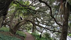 [OS] [OC] Albert Park Auckland New Zealand [960 x 540]