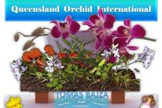 Tomas Bajza at Queensland Orchid International Orchid Leaves Turning Yellow, Hanging Orchid, Orchids In Water, Miniature Orchids, Types Of Orchids, Orchid Pot, Growing Orchids, Winter Light, Phalaenopsis Orchid