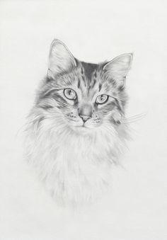28 Best cat sketch images | Cat sketch, Cat drawing, Cat art