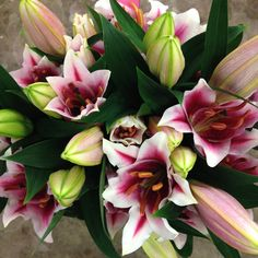 Lily - Mero Star. Sold in bunches of 10 stems from The Flowermonger, the wholesale floral home delivery service.