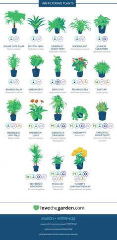 Many of us spend most of our time indoors, so it's important to cultivate a space that's a healthy one. A simple—and beautiful—way to do this is through houseplants; they add some green to your home while being an effective way to purify the air. NASA hardly seems like the organization that would give us insight into these types of plants, but in the late 1980s, the US government agency collaborated with the Associated Contractors of America (ALCA) to come up with a list of the most…