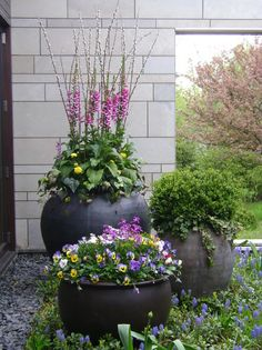 Spring flowers - Traditional Landscape by Scott Byron & Company Spring Plants, Spring Garden, Spring Flowers, Lavender Flowers, Container Flowers, Container Plants, Winter Container Gardening, Chicago Landscape, Traditional Landscape