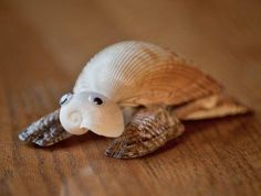 Gopher Tortoise | Low Tide Treasure