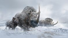 Woolly Rhinos by Balcsika on DeviantART