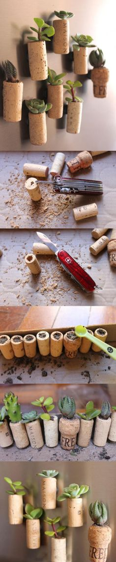 Succulents in corks made into magnets!  This would actually be a really cute wedding favor for guests!!