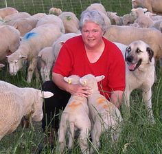 Debunking the 'can't finish lambs on grass' myth   Graze magazine