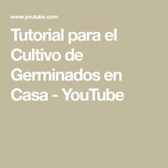 Tutorial para el Cultivo de Germinados en Casa - YouTube