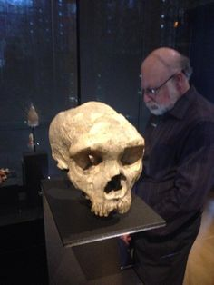 Twitter / digiphile: First Neanderthal skull ever ...