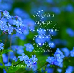 Gratitude is joy. For the app of uplifting wallpapers ~ www.everydayspirit.net xo #gratitude #joy #calm