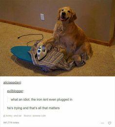 Funny Random Meme Dump 2 - images/slides added under category of Popular Memes and Images Cute Funny Animals, Funny Animal Pictures, Funny Cute, Funny Dogs, Cute Dogs, Hilarious, Funny Farm, Dog Memes, Funny Memes