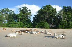 Little Andaman Island (North Andaman Island, India) - Top Tips Before You Go - TripAdvisor Andaman And Nicobar Islands, Trip Advisor, Dolores Park, India, Tips, Travel, Goa India, Viajes, Destinations