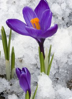 Flores que no se asustan de nada, ¡ni del frío! Favorite Color, Glass Vase, Purple, Home Decor, Cold, Gardens, Flowers, Parking Lot, Home Layouts