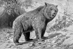 Ursus by Heinrich Harder (1858-1935)