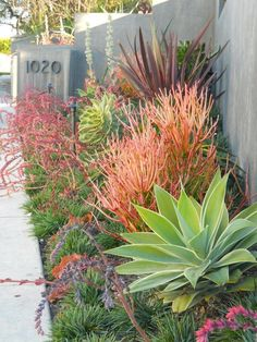 drought tolerant combination front yard landscaping ideas - Google Search