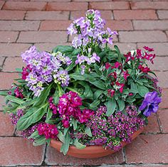 Container gardening number 9 growing information and pictures Full Sun Planters, Full Sun Container Plants, Outdoor Planters, Garden Planters, Container Gardening, Gardening Tips, Outdoor Gardens, Sun Garden, Dream Garden