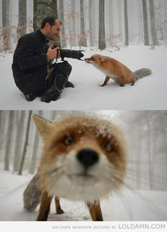 A Photographer met a cute and curious fox in the woods