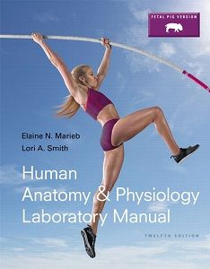 Human anatomy and physiology 10th edition marieb test bank nursing human anatomy physiology laboratory manual fetal pig version 12th edition solutions manual marieb smith fandeluxe Images