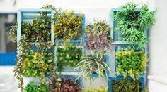 Fantástico! Impressionante! Das paredes ao teto, lindos jardins suspensos - # #dicasdedecoração #jardim #jardimvertical