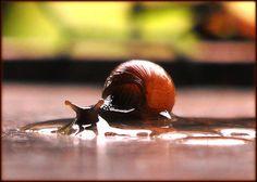 Snail Farming: Snails under stress