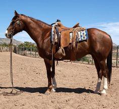 STOUT FLASHY RANCH GELDING American Quarter Horse, Quarter Horses, Western Horsemanship, Horse Classifieds, Cowboy Ranch, Barrel Racing Horses, Western Riding, Horses For Sale, Horse Pictures