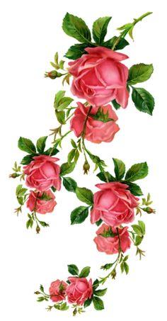 gifs fleurs - Page 2 Victorian Flowers, Vintage Flowers, Vintage Floral, Art Floral, Floral Prints, Botanical Flowers, Botanical Prints, Vintage Rosen, Decoupage Vintage