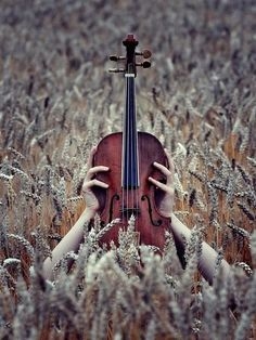 Inspiration. Violin in wheat field.