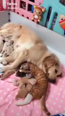 Cute Kittens And Puppies Together a Cute Animals To Draw Easily Cute Funny Animals, Cute Baby Animals, Funny Dogs, Animals And Pets, Cute Cats, Jungle Animals, Cute Animal Videos, Funny Animal Pictures, Kittens Cutest