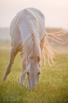 Angelic Horse! I love this photo and the way the colors softly merge. I can feel the sun and smell the grass. Beautiful.