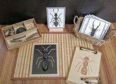 Pièces détachées insecte/Bug Exploration construire un Bug