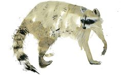 Racoon by Sarah Maycock - it looks like Sumi-e but her website doesn't specify