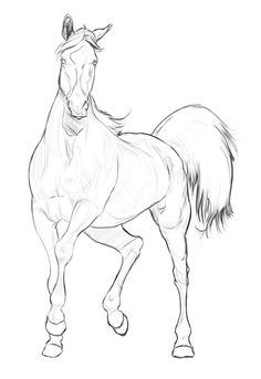horse drawing ❤ liked on Polyvore | things to draw | Horse drawings ...