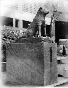 "THE STORY OF HACHI-KO - Hachiko     TRUELY THE STORY OF A ""MOST LOYAL"" AKITA  Dog   Beloved by all who hear his story ""Hachi-ko"" has truly touched the hearts of people around the world.   His legend lives on larger than life."