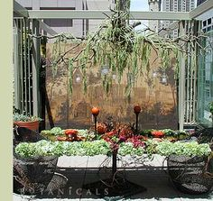Botanicals, Inc: Chicago's leading special-event floral design firm.