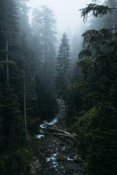 Лесной пост. №1. фотография, лес, деревья, Времена года, Природа, длиннопост