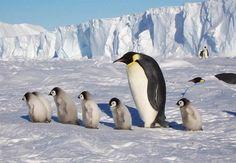 Антарктида: загадки шестого континента