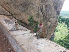Sigiriya Sri Lanka, Kangaroo, Animals, Parking Lot, Elephants, Lets Go, Baby Bjorn, Animales, Animaux