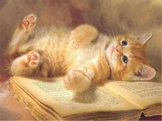 A cat lying on a book.