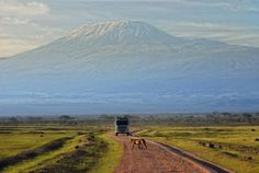 Mt Kilimanjaro (Tanzania). 'It's difficult to resist the allure of climbing  Africa's highest peak, with  its snow-capped summit and views over  the surrounding plains. But there are also  other rewarding ways to experience the  mountain. Take a day hike on the lush lower  slopes, spend time learning about local  Chagga culture or sip a sundowner from  one of the many nearby vantage points with  the mountain as a backdrop.' http://www.lonelyplanet.com/tanzania/mount-kilimanjaro