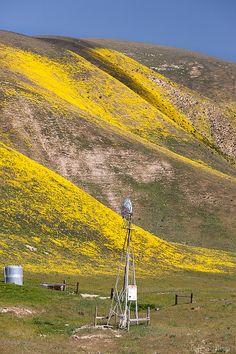 Highway 58 Wildflowers, Carrizo Plain National Monument CA