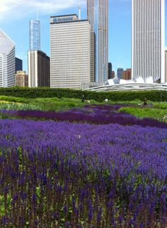Lurie Garden in Chicago #GardenDesign