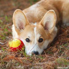 Play Ball.