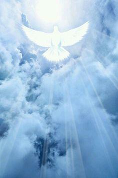 images of holy spirit dove Santa Paloma, Santas Tattoo, Heaven Pictures, Heaven Images, Jesus Wallpaper, Heaven Wallpaper, Première Communion, Pictures Of Jesus Christ, Christian Pictures