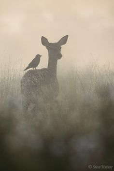 The Doe and the Jackdaw More Magic Animal, Photography Images, Paintings Ideas, Art painting idea Wildlife Photography, Animal Photography, Photography Tips, Pregnancy Photography, Beautiful Creatures, Animals Beautiful, Choucas Des Tours, Animals Tattoo, Animals And Pets