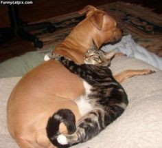 Funny Animal Pictures - View our collection of cute and funny pet videos and pics. New funny animal pictures and videos submitted daily. Baby Animals, Funny Animals, Cute Animals, Nature Animals, Cute Kittens, Cats And Kittens, Photo Chat, Raining Cats And Dogs, Tier Fotos