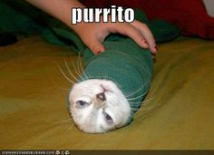 poor kitty! hahahaha