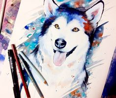 Siberian Husky watercolor painting by Pixie Cold