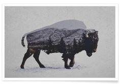 The American Bison - Premium Poster