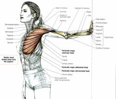 pectoralis major | Stretching: How to stretch the Pectoralis Major