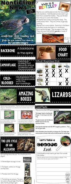 This 115 page product is what you need to implement ELA Common Core Standards in your classroom. It includes 14 nonfiction articles, 1 book, 1 chart for close reading on reptiles. The nonfiction articles include stunning photographs and nonfiction text features. They can be used in guided reading groups or whole class. They are a great way to practice close reading and answering text dependent questions citing evidence.