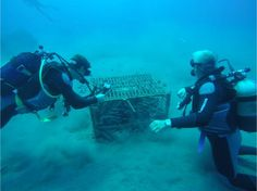 The Gaia Winery's experimentation with underwater, oxygen-free aging produces astonishing results Greece Travel, Greece Trip, Santorini Greece, Greek Islands, Gaia, Under The Sea, Underwater, Cool Photos, To Go